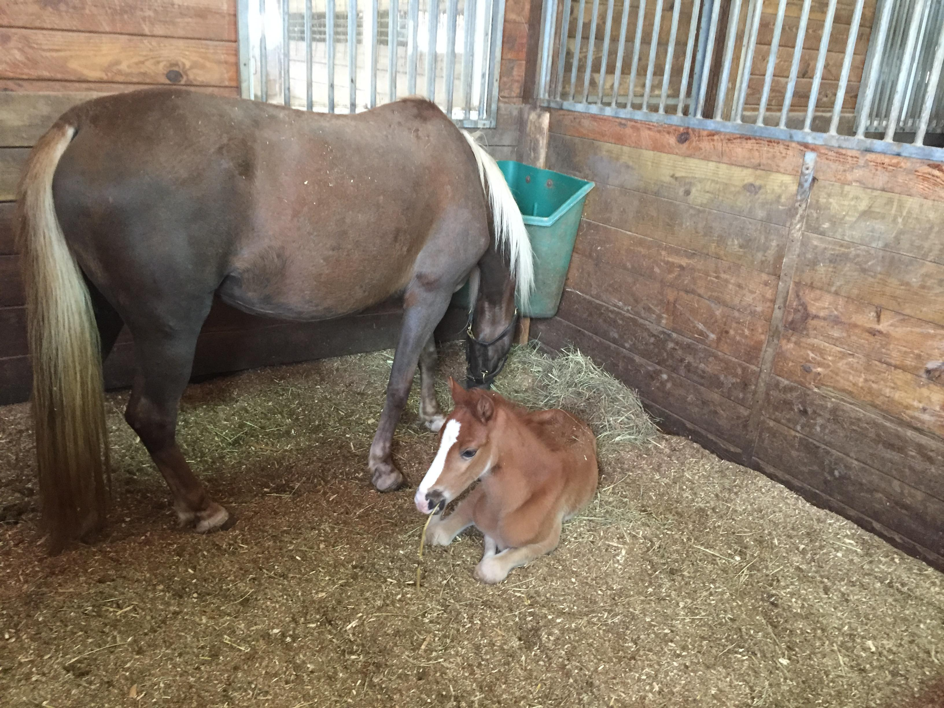 Horse born during the tornado PHOTO: WZTV