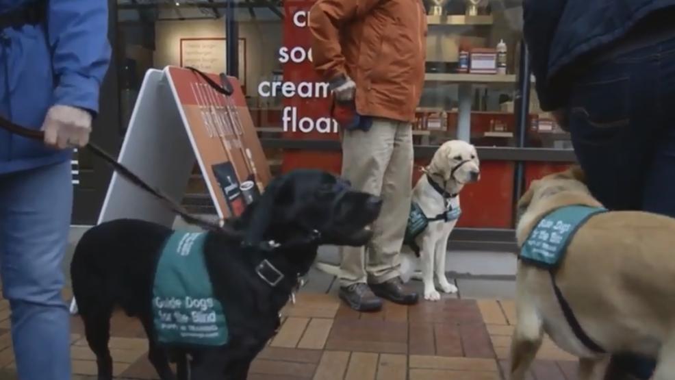 Dog Obedience Training Portland