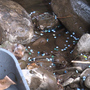 Volunteers clean up plastic pellets that spilled into Pocono Creek