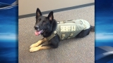 Multnomah County K-9 officer, Ranger, gets new body armor thanks to charity