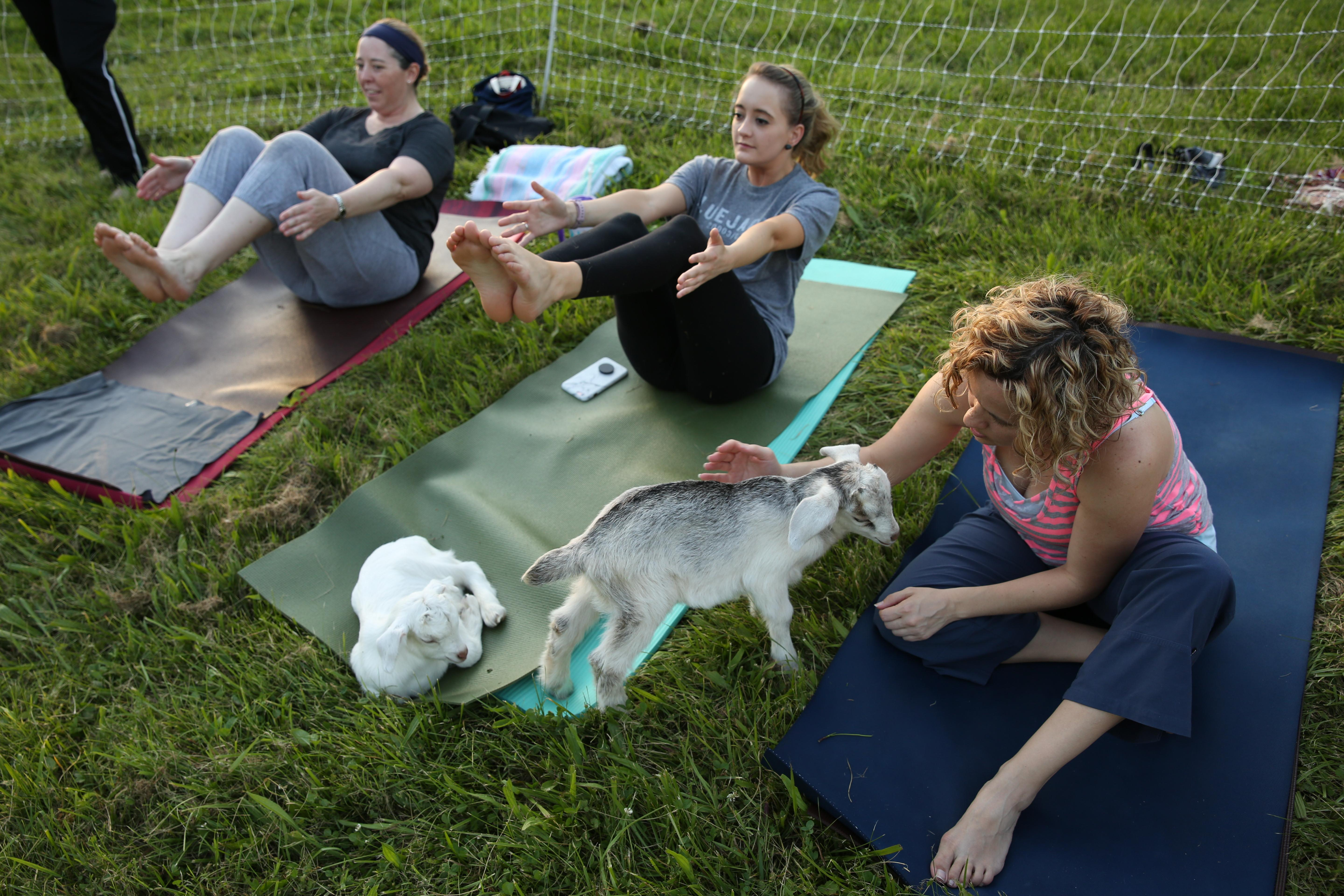 Howard County-based yoga instructor Janice Ingson is taking her practice to the farm. For about a month, Janice has been partnering with farms throughout the DMV for goat yoga, but the most recent class was held at Fairland Farm in Silver Spring.  Although many of the students found the goats, some of which were three days old, a little distracting, everyone was giggling by the end of it.   Janice says she'll be taking the class to farms throughout the mid-Atlantic, but you can keep an eye on the goat yoga schedule on Instagram, @maryland_goat_yoga.  (Amanda Andrade-Rhoades/DC Refined)