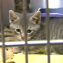 Cats rescued from condemned Washington Island home ready for adoption