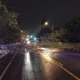 150-feet-tall trees fall across road in Federal Way