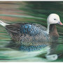 Georgia teen wins National Junior Duck Stamp art contest