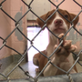 Columbia on mission to clear out animal shelter & rescues