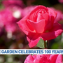 Portland's Rose Test Garden celebrates 100th birthday