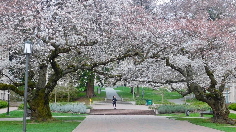Photos: Cherry blossoms sprout into gorgeous colors as spring gets under way