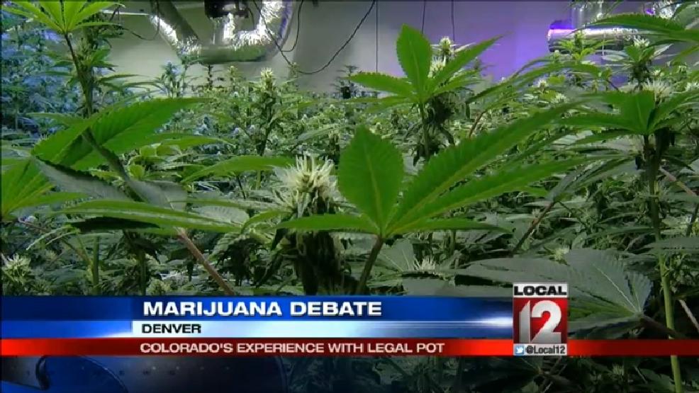 legalization of marijuana debate