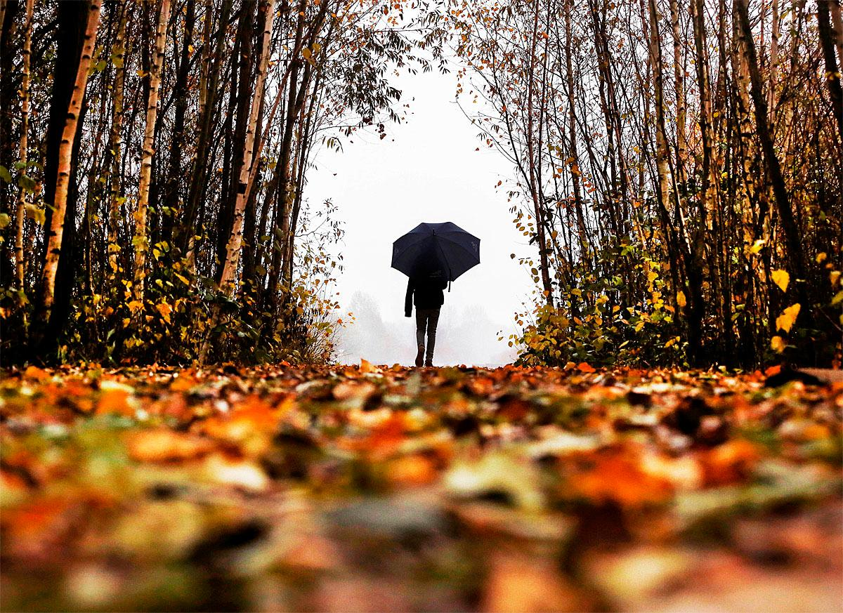 A man walks out of a leaf lined forest as it rains in Frankfurt, Germany, on a dark and grey Tuesday, Nov. 15, 2016.(AP Photo/Michael Probst)