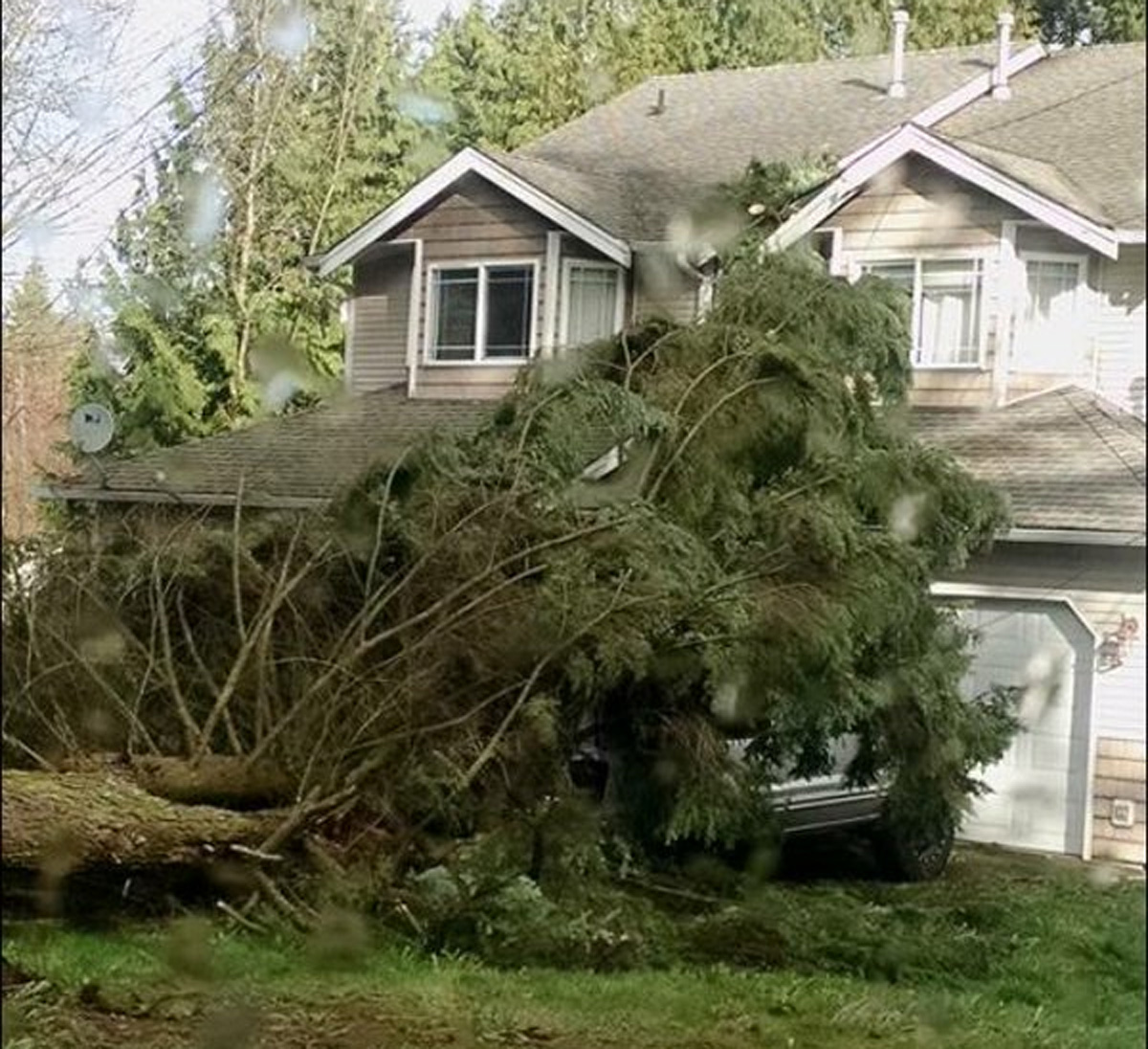 Gusty winds topple a tree in a Snohomish County neighborhood. (Photo courtesy of Melissa Tolle-Peacock)