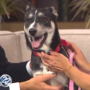 Pet of the Week: Ruthie is a playful puppy who needs a home