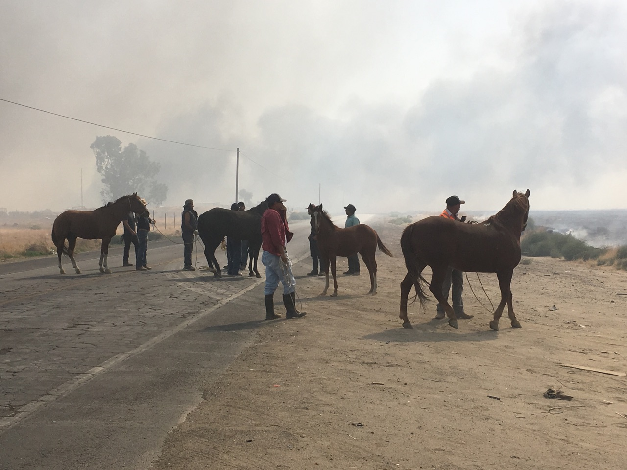 Horses are being evacuated as a grass fire encroaches on their stables in the area of Cottonwood Road in south Bakersfield, Calif., Monday, Oct. 9, 2017. (KBAK/KBFX photo/Alberto Garcia)