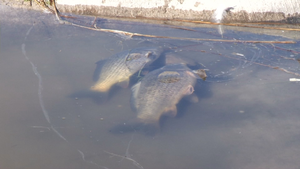 hundreds of fish dead in ascarate lake fishing ban in