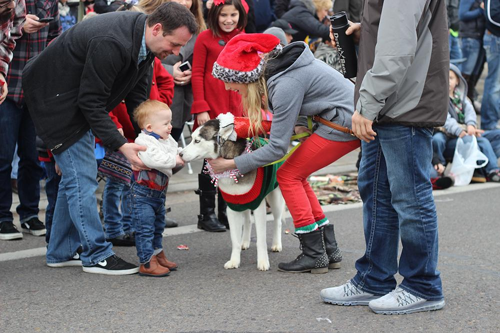 A young boy meets a service dog at the 63rd Annual Springfield Christmas Parade in Springfield, Ore., Saturday, Dec. 5. Photo by Claire Aubin.