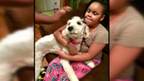 "Can you help find ""Stormie""? Children's therapy dog goes missing"