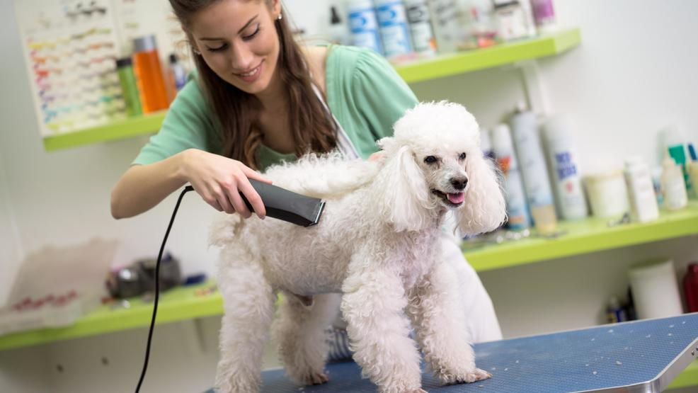 Kfox14 Investigates Unlicensed Dog Groomers Charged With Animal